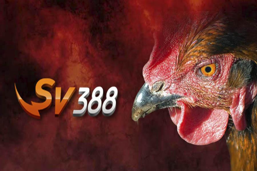 SV388 – Nhà cái đá gà uy tín cho dân chơi sành sỏi hiện nay